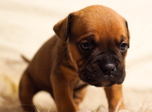 一人暮らしでペットを飼う驚きの効果とは?意外な事実とオススメ5選