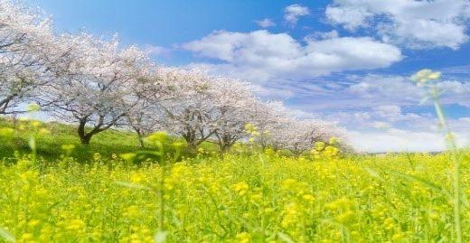花粉症で喉の痛みにロキソニン、アレグラは効く?おすすめ市販薬で即効治す!